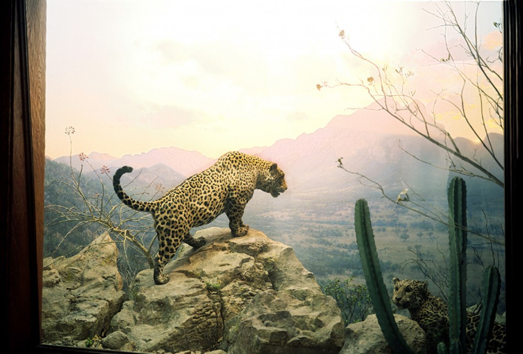 Jaguar-2004for-webpage2-1024x694