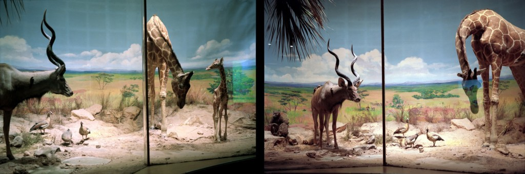 Savanna-Tanzania-2003-diptych-for-web-1024x341