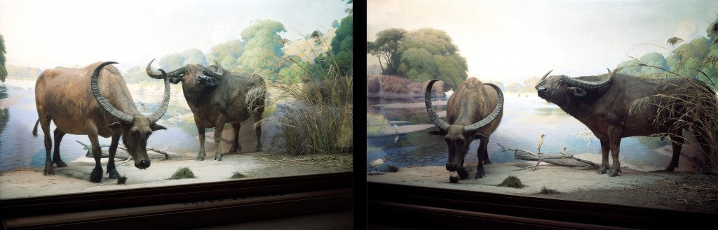 buffallo-diptych-for-web-1024x329